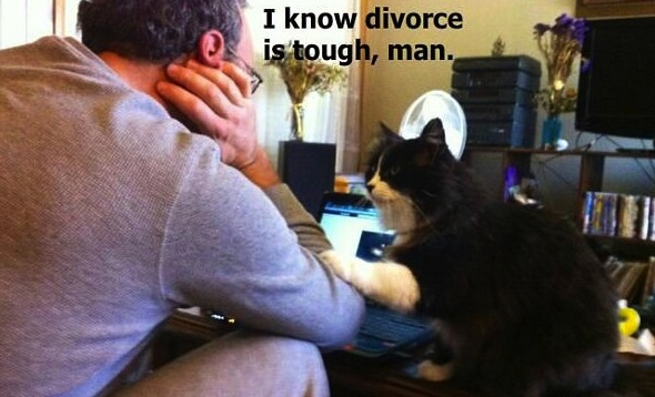 1sympathetic-cat-i-know-divorce-is-tough-man