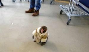 ikea monkeycrop