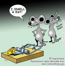 suspicious mice