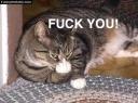rude cat1