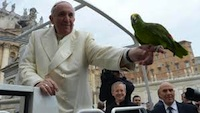 pope blesses parrot_200