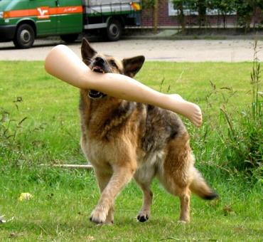 dog-w-leg