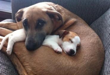 dog and sleeping puppy