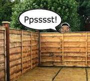 peeking over fence180