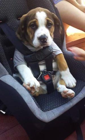 car seat puppy300
