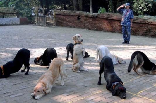 dog_circle