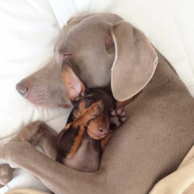 Dog protects puppy