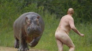 naked man and hippo
