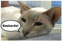 cat swearing