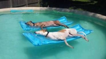 pool-pups