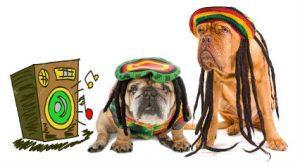 rasta-dogs