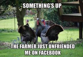 turkey_fark