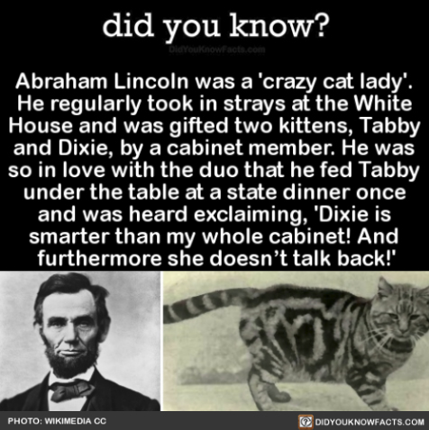lincoln cats